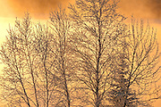 Poplar trees covered in hoarfrost at sunrise by Lac Seul<br /> Ear Falls<br /> Ontario<br /> Canada