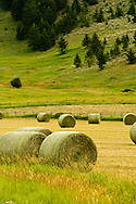 Hay bales in field, southwest Montana