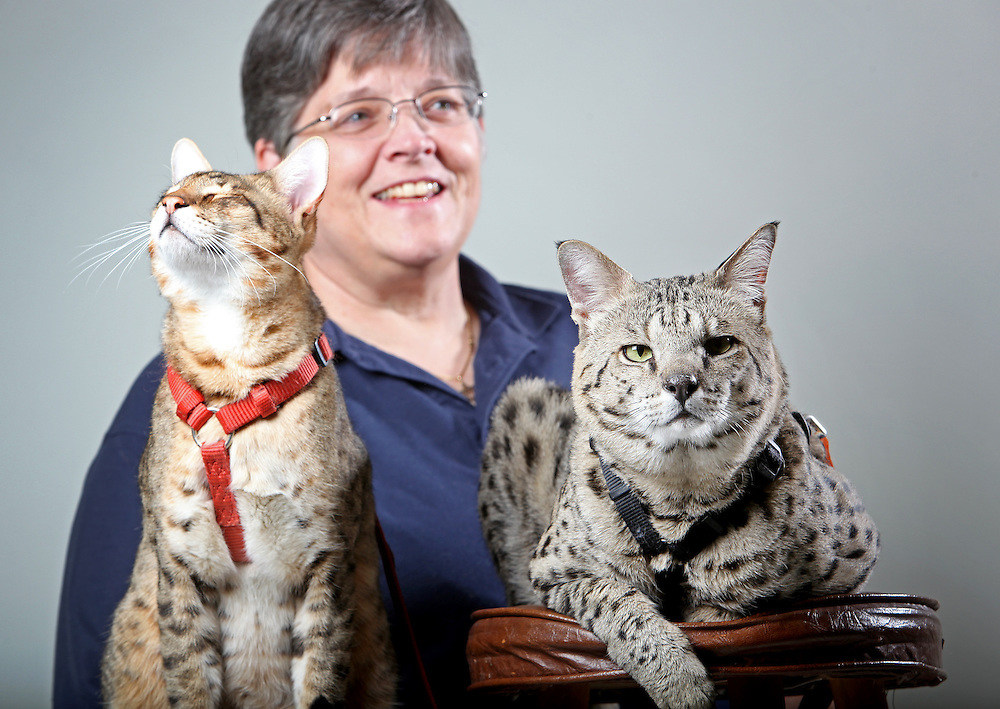 mp050713c/A1/Morgan Petroski/050713 -- Deborah-Ann Milette (cq), from Oklahoma, with her Savannah cats, 4 year-old Peanut, at left, and 7-year-old Motzie, at right, Tuesday, May 7, 2013. (Morgan Petroski/Journal)