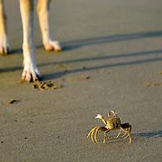 Crab V/s Dog