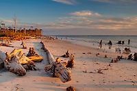 Driftwood and tree stumps on a rural beach on Cape San Blas, Florida.