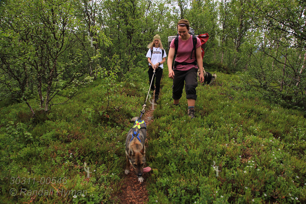 Writer Susan Zimmerman and guide Maja Kvikstad take sled dog for summer conditioning hike in woodlands of Tromso Villmarkssenter on Kvaloya Island outside city of Tromso, Norway.