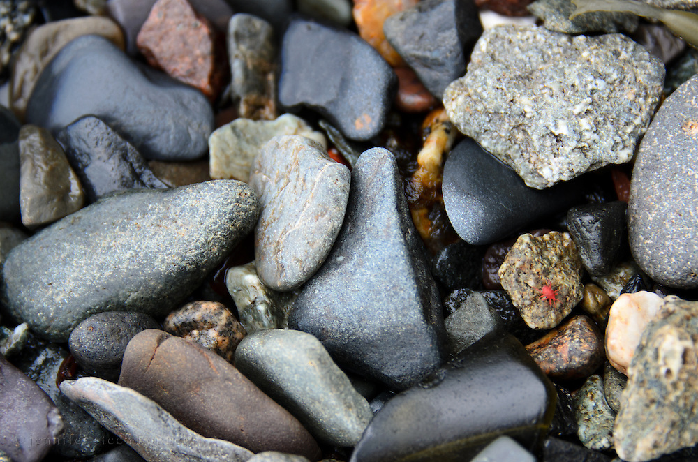 Tumbled beach stones with a red beach mite (Neomolgus littoralis).