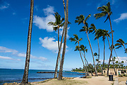 Palm trees at Haleiwa Ali'i Beach Park, island of Oahu, Hawaii, USA.