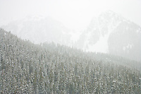 Tatoosh Range beyond Paradise Valley, Mount Rainier National Park in a snowstorm, Washington, USA