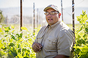 Juan Gonzales is part of the ALBA farm incubator program in Salinas, CA. Juan Gonzales launched Moonlight Organic Farms at ALBA in 2017. He grows strawberries, vegetables and cut flowers on 1.5 acres while also studying agriculture at the local community college