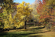 Autumn colors in The Ramble of Central Park, New York City