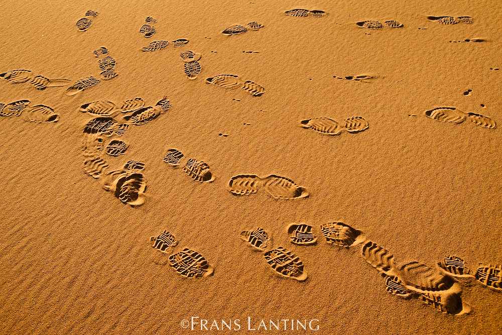 Human footprints in sand, Namib-Naukluft National Park, Namibia