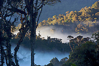 A cloud forest with misty valleys at sunrise.  2700 m elevation near Mount Hagen, Papua New Guinea.