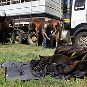 'A Day at the Polo'<br /> Competition horses tethered and prepared for competition during the International Polo Test match between Australia and England at the Windsor Polo Club, Richmond, Sydney, Australia on March 29, 2009. Australia won the match 8-7.  Photo Tim Clayton