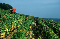 Wine harvest in  Burgundy, France..© Owen Franken