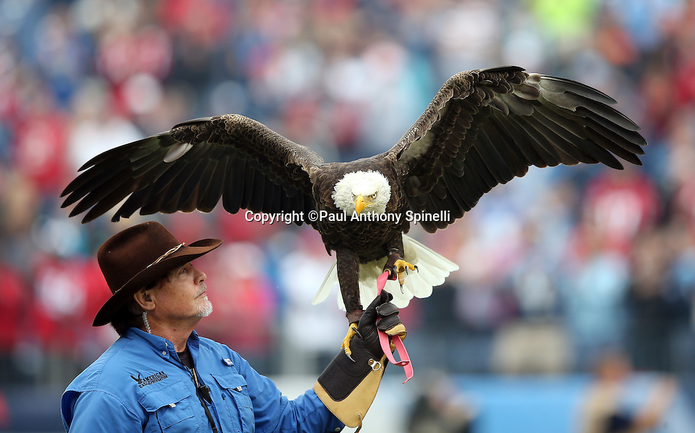 A handler holds up his hand as Challenger the bald eagle lands after circling the field during pregame festivities before the Tennessee Titans 2015 week 7 regular season NFL football game against the Atlanta Falcons on Sunday, Oct. 25, 2015 in Nashville, Tenn. The Falcons won the game 10-7. (©Paul Anthony Spinelli)