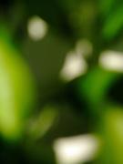 Taches de soleil dans la verdure. Sonneflecken im Blättergrün. © Romano P. Riedo