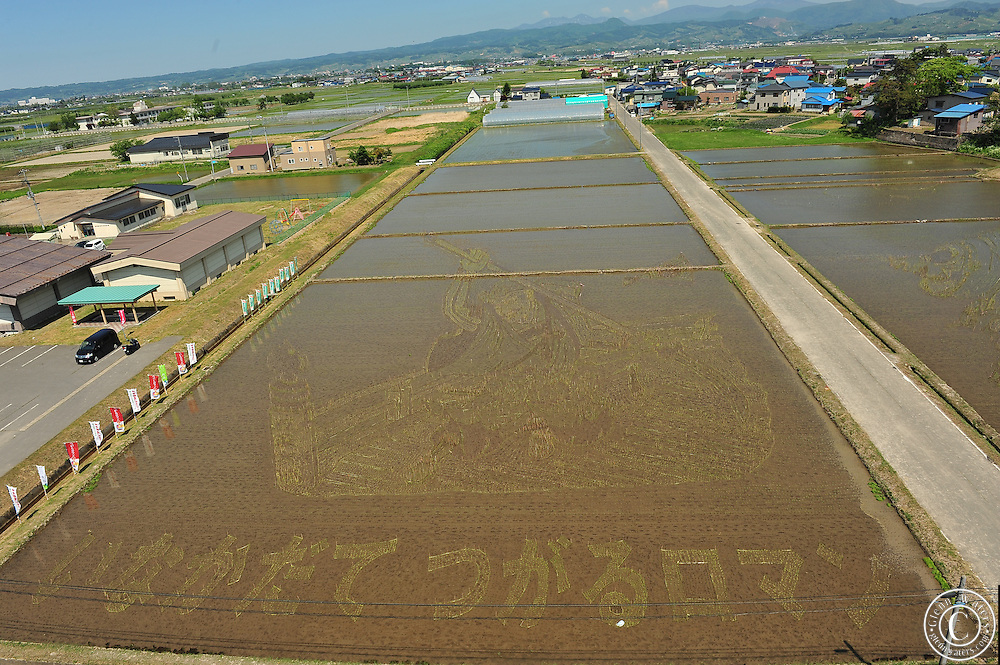 The design is done by an artist and then in a computer the design is calculated and adjusted to what it would look like when it is viewed from the town hall watch tower. Then the design is marked out in the rice fields.