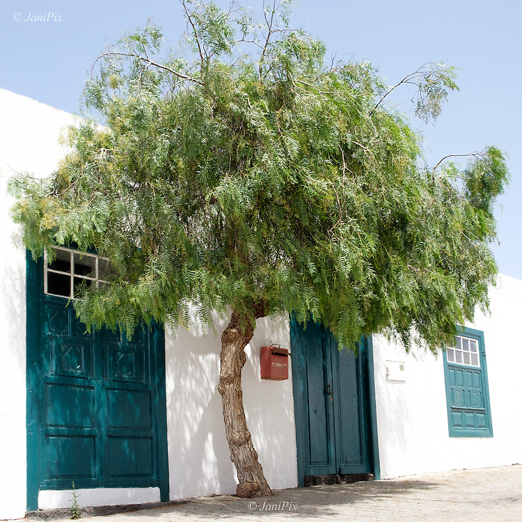 A postbox nestles in the shade of a beautiful tree, and I loved the contrast between the red and the shades of green of the tree and windows and door in this historic building in Teguise town, Lanzarote