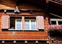 Golzern,  Switzerland, cat peeking out of the window.