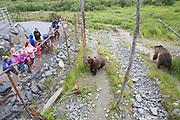 Björnar på Alaska Wildlife Conservation Center, USA