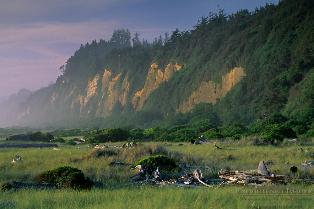 Gold Bluffs Beach, Prairie Creek Redwoods State Park, Humboldt County, CALIFORNIA