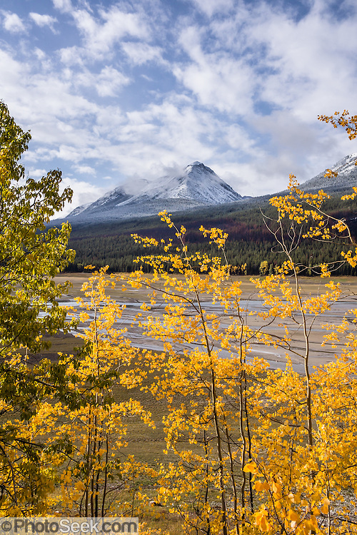 Snow-dusted peaks in the Maligne Range rises above yellow aspen colors along Maligne River at Medicine Lake, in Jasper National Park, Canadian Rockies, Alberta, Canada. Located in the Maligne Valley watershed, Medicine Lake is not really a lake but is a natural back up in the Maligne River that suddenly disappears underground. Jasper is the largest national park in the Canadian Rocky Mountain Parks World Heritage Site declared by UNESCO in 1984.