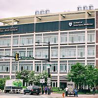 Penn School of Vet Medicine