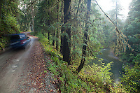 Scenic image of road going through Redwood National Park, CA