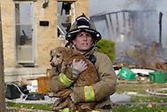 A Fairborn firefighter tries to locate the owner of a dog found in the area of what appears to be a gas-line explosion on Wayne Drive in Fairborn, Saturday, November 12, 2011.