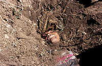 "A 45 years old Maoist roughly buried near Daha village...""Yesterday - March 7, 2005 - at around 10am a patrol from the RNA (Royal Nepal Army) was in this area. Nobody recognised them at first because they got in disguised as women, but then they revealed their hidden weapons and shot dead that Maoist. Soon after other RNA in uniform arrived here and destroyed a Maoist's house. They have also captured an old man, he was beaten and then released. The RNA told us that they killed the Maoist because he did have a socket bomb with him, but we didn't see it and there was not any explosion. We are afraid from both the Royal Nepal Army and the Maoist"" local witness says."