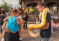 Sept. 9, 2012 - Merrick, New York, U.S. -  WILLIE, the Albino Bermese Python, and his handler, from Jungle Bob's Reptile World, draw children and their families, at the 22nd Annual Merrick Festival on Long Island,.