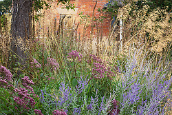 Autumn border at Fields Farm with Perovskia atriplicifolia 'Blue Spire', Stipa gigantea, Eupatorium purpureum and foxglove seedheads