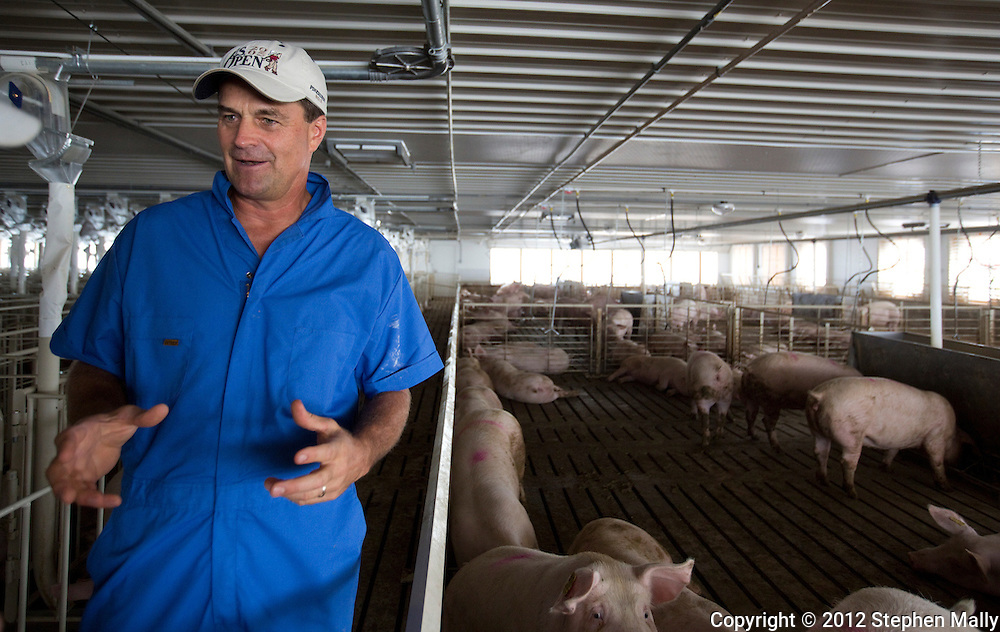 Tom Dittmer talks in a gestation building with some group housing in pens at Grandview Farms in Eldridge, Iowa on Thursday August 9, 2012.