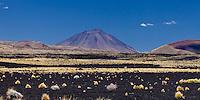 VOLCAN PAYUN LISO (3.833 m.s.n.m.), ESTEPA DE COIRONES (Festuca gracillima - fam. poaceas) Y SUELO NEGRO DE PIEDRAS VOLCANICAS, PAMPA NEGRA, RESERVA PROVINCIAL LA PAYUNIA (PAYUN, PAYEN), MALARGUE, PROVINCIA DE MENDOZA, ARGENTINA (PHOTO © MARCO GUOLI - ALL RIGHTS RESERVED)