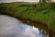 An egret sits quietly in Wreck Pond in Sea Girt, NJ