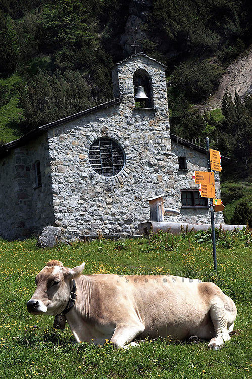 Liechtenstein  Malbun  June 2008.Small town high in the Alpine (southeastern)..The  Brown Swiss cows to the pasture in the back the Peace  Chapel..