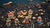 Troll Family Autumn Mushroom Jamboree. Composite of 20 focus stacked images taken with a Fuji X-H1 camera with a 56 mm f/1.2 lens (ISO 200, 56 mm, f/2.8, 1/125 sec). Raw images processed with Capture One Pro and Helicon Focus (Method C).
