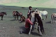 Mongolia. At the end of the day the men round the horses up for milking.     /  cet homme traie une jument pour obtenir du lait, cette boisson appelee KOUMIS est la boisson nationale.