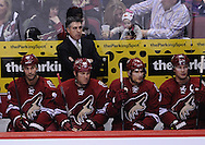 Mar. 2, 2013; Glendale, AZ, USA; Phoenix Coyotes head coach Dave Tippett watches from the bench in the game against the Anaheim Ducks at Jobing.com Arena. The Coyotes defeated the Ducks in a shootout 5-4. Mandatory Credit: Jennifer Stewart-USA TODAY Sports