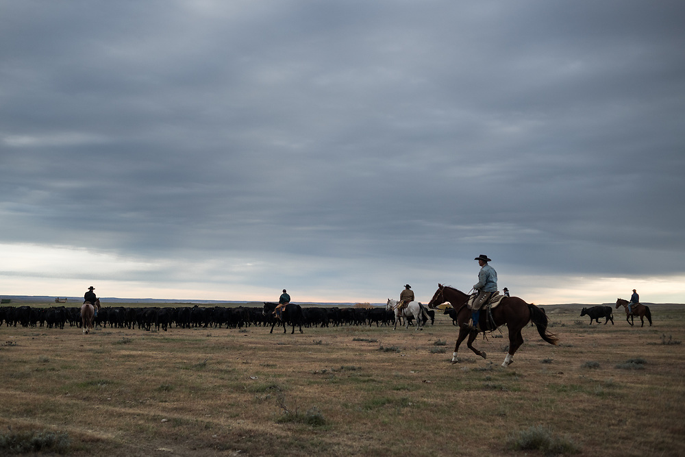 A group of friends prepare to round up cattle on land owned by a grazing association west of Meadow, SD on October 8, 2017. Grazing associations provide a way for multiple ranchers to defray the costs of land owning and usage for grazing cattle and on occasion provide access to national grasslands and grazing areas.