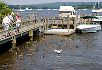 Feeding Ducks on the Connecticut River, at the head of Main St., Essex Harbor, Essex, CT