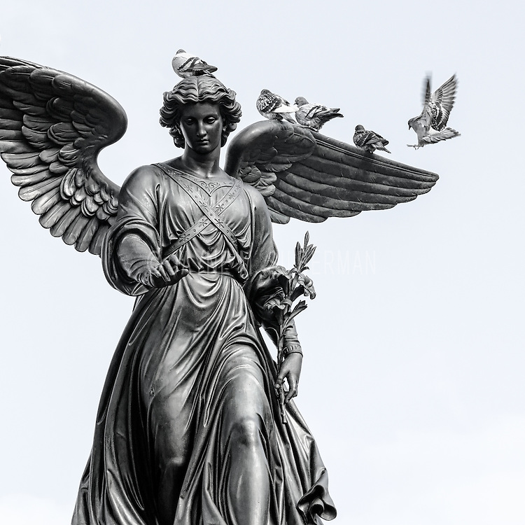 Pigeons love to visit on the Angel of the Waters statue.