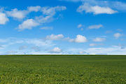 Pasture field under blue sky with cumulus clouds near Yass, New South Wales, Australia. <br />