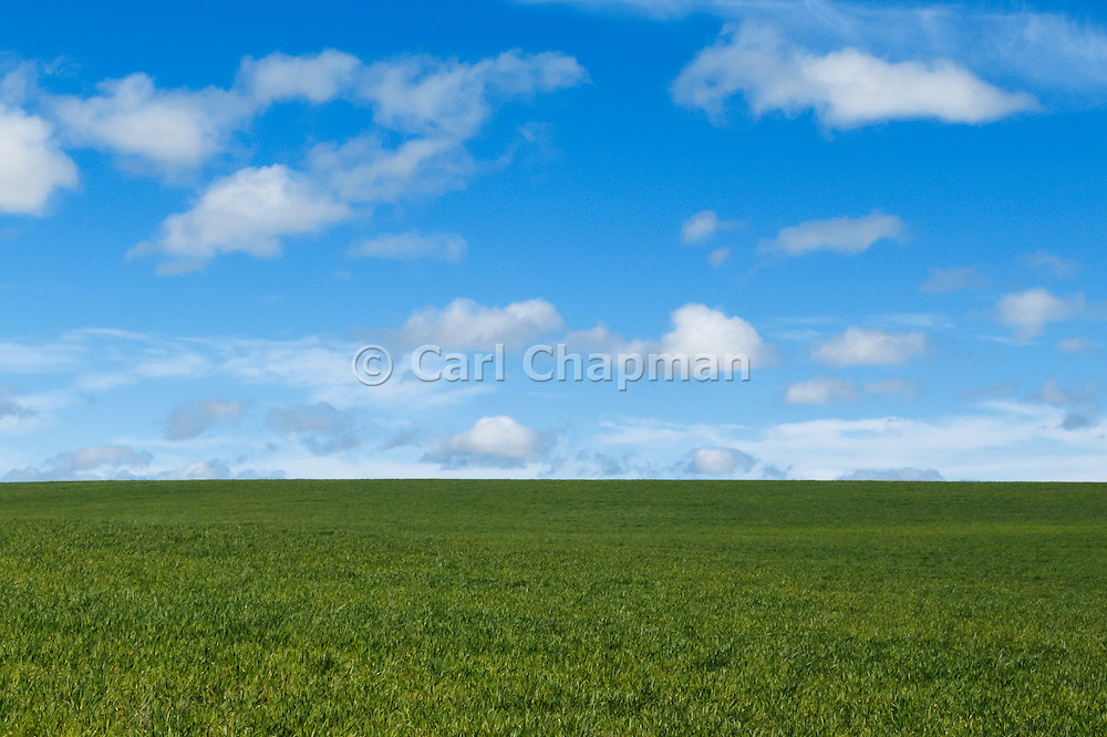 Pasture field under blue sky with cumulus clouds near Yass, New South Wales, Australia.