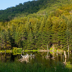 A beaver pond on the edge of Camel's Hump State Park in Duxbuy, Vermont.
