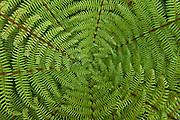 Green fern fronds