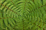 Green fern fronds