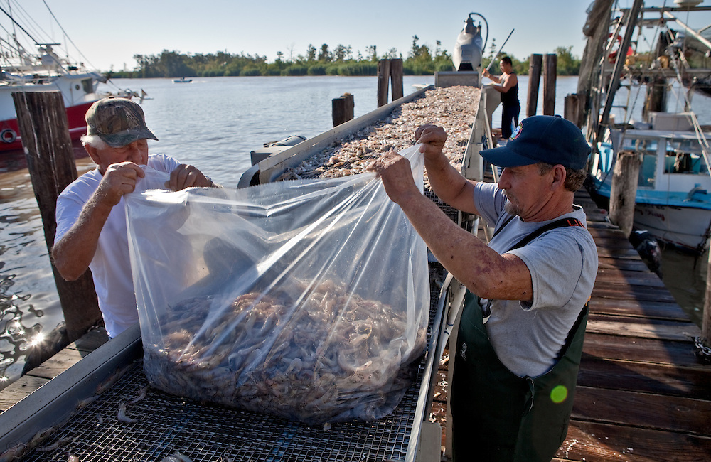 Acy Cooper Jr. head of the shrimpers association in  Venice LA back after one of his rare times out shrimping this year since the BP oil spill. He and his father, Acy Cooper Sr. take a bag of shrimp from their catch and sell the rest to a shrimp wholesaler.