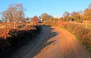 Winter landscape sandy track through heathland, Sutton Heath, Suffolk, England, UK