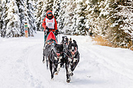 Musher Emilie Entrikin competing in the Fur Rendezvous World Sled Dog Championships at Goose Lake Park in Anchorage in Southcentral Alaska. Winter. Afternoon.