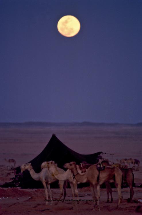 Winter full moon near a Bedouin encampment in central Saudi Arabia.