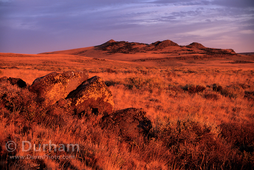 high-desert grassland, Hart Mountain National Wildlife Refuge, Oregon.