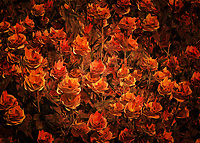 "Anyone who tells you that all roses are basically the same is not someone who knows what they are talking about. The next time someone says something as ridiculous as that, simply show them this unique, beautiful fine art piece by celebrated artist Jan Keteleer. This ""Bronze Roses"" piece certainly lives up to its name. You are going to find yourself virtually surrounded by one of the most moving depictions of roses you have ever seen in your life. At the same time, there is something to this piece that suggests to you that there is more going on here than just flowers. .<br />